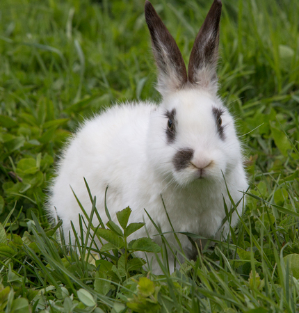 A view of a white rabbit on a green grass