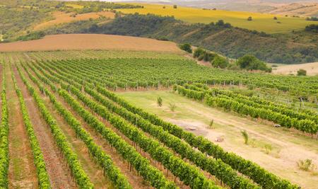 Vineyards along the Danube river in Bulgaria