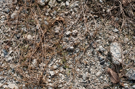 dirt on ground: Pebble with hay and dirt ground Stock Photo