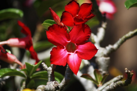 innate: Flowers in the garden