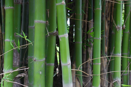 melodious: Bamboo