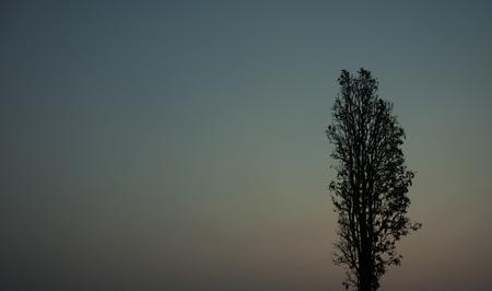 centenarian: Dead tree on sky background Stock Photo
