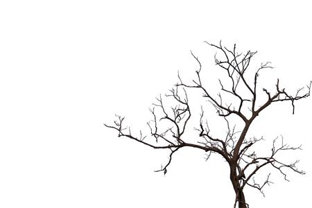 Naakte boomvorm die op witte achtergrond wordt geïsoleerd. Stockfoto