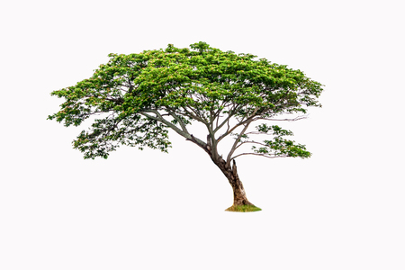 Barren tree on isolated background