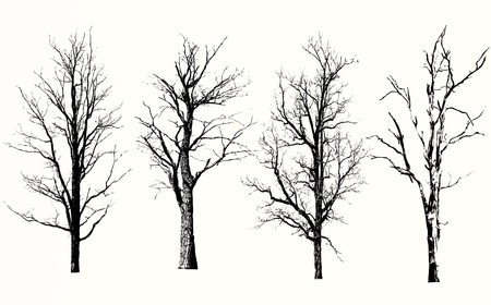 Collection of isolated tree on white background Stock fotó