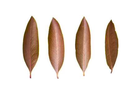 Four leaves, isolated white background. Stock fotó