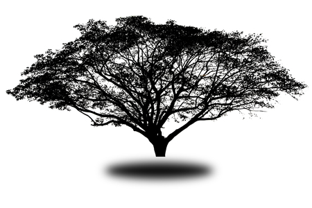 silhouette tree Isolated on white background