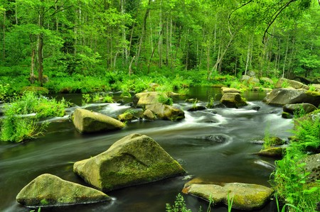 river stones: wild river through green forest