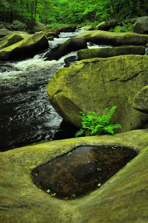 wild river through green forest Stock Photo - 7275460