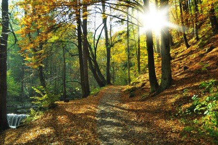 nice path on autumn time Stock Photo - 8257635