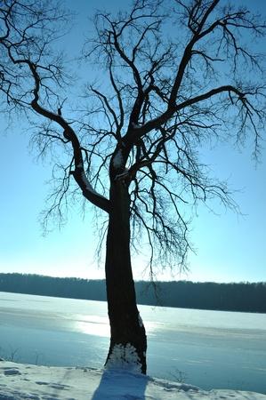 la silhouette des arbres sur l'heure d'hiver Banque d'images - 8798820