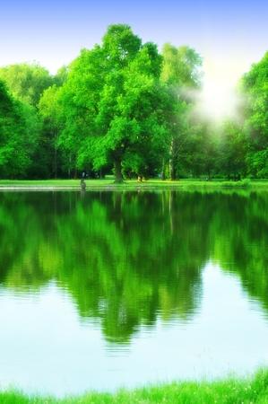 자연 공원에 푸른 나무