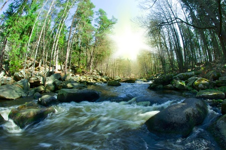 wild river on summer day photo