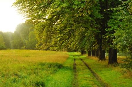nice path on mornig time photo