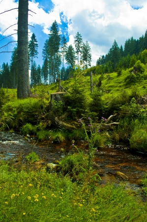 small river through green forest photo