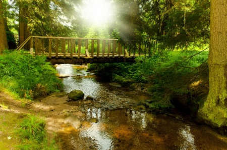 footbridge through green forest photo