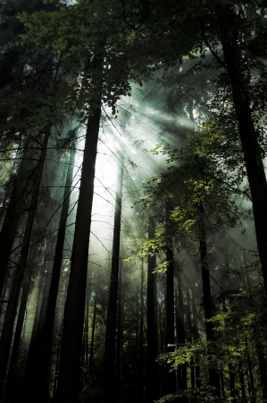 national forest: light of sun in dark forest