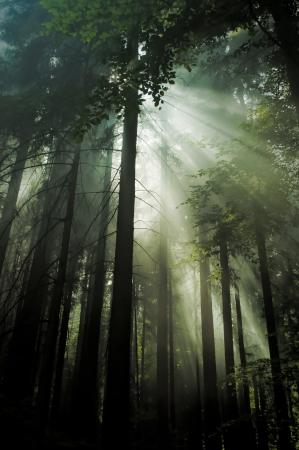 light of sun in dark forest