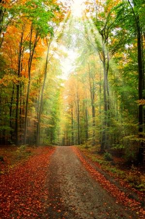 Weg throught Herbst Wald mit Sonnenlicht Standard-Bild