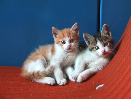 two little kittens in chair