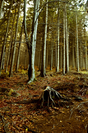 어두운 숲에서가 태양