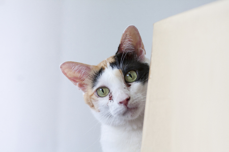 A young calico cat curiously peeking out from behind a cardboard box. Foto de archivo