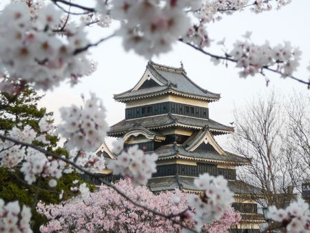 Matsumoto Castle during cherry blossom (Sakura) is one of the most famous sights in Japan.