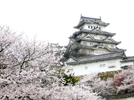 Cherry Blossom (sakura) in Himeji Castle is a spectacular sight. Editorial