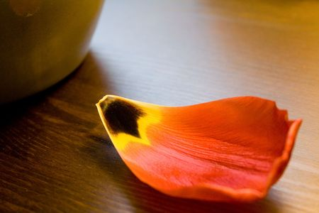 A fallen down flower petal, symbolizing the transcience of all life.