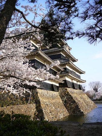 Matsumoto Castle in spring, during cherry blosom (Sakura).