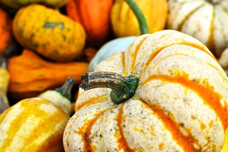 cymbling: Selection of small pumpkins, used for decoration Stock Photo