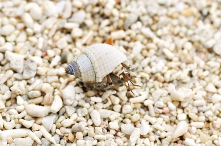 microcosm: Tiny little hermit crab on the beach