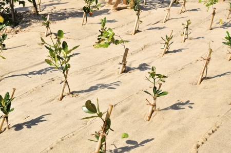 Fresh planted trees on a reforestation project  The earth is covered by cloth to prevent erosion   Stock Photo