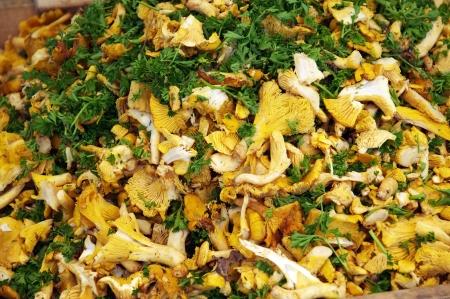 recently: Heap of recently picked, fresh chantarelles (chanterelles) Stock Photo