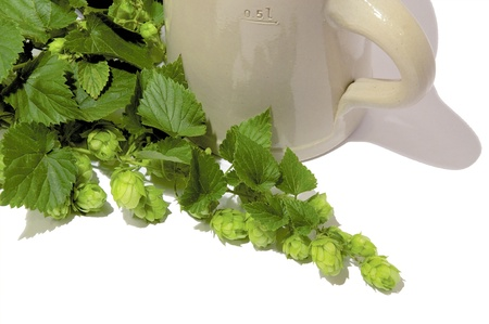stein: Traditional Stein Beer Mug with fresh twigs of Hops, one of beers main ingredients. Isolated on white.  Stock Photo
