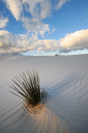 White Sands National Monument in New Mexico, USA Stock Photo - 13642041