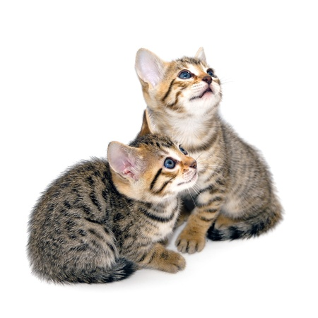 Kittens on a white background Stock Photo