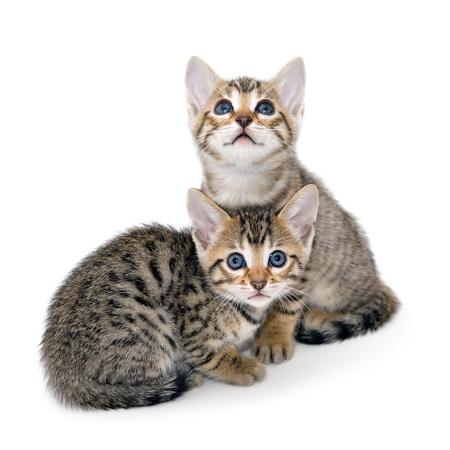 白い背景の上の子猫 写真素材