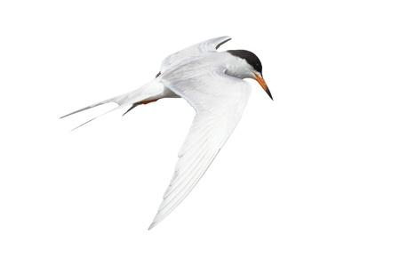 Common isolated on white background Stock Photo