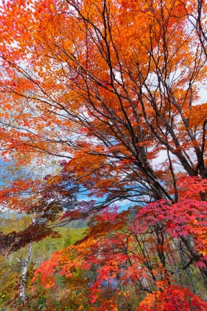 gifu: Autumn color of the forest in Gifu prefecture, Japan