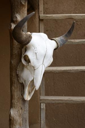 木製の柱に牛の頭蓋骨 写真素材