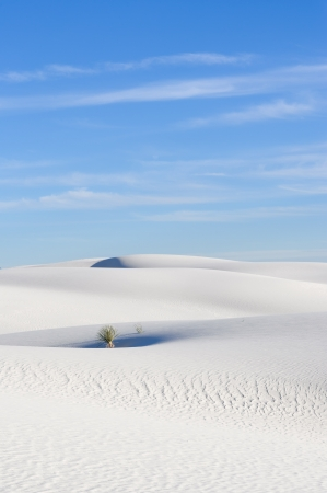 chihuahua desert:  White Sands National Monument, New Mexico, USA  Stock Photo