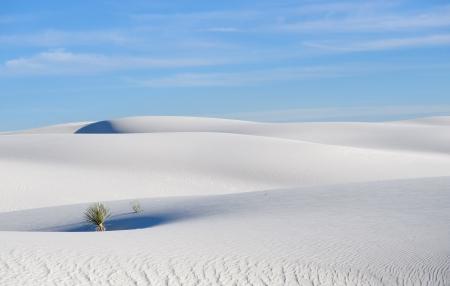 chihuahua desert:  White Sands National Monument, New Mexico, USA  Stock Photo