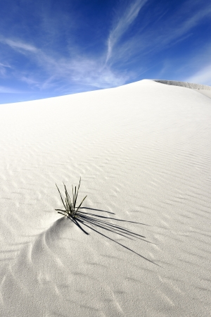 chihuahua desert: White Sands National Monument, New Mexico, USA. Stock Photo