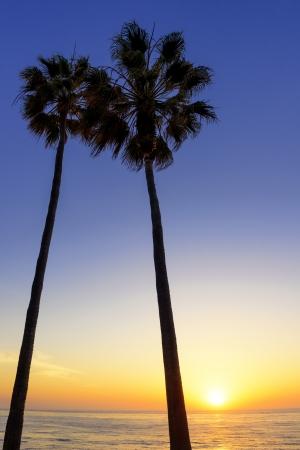 La Jolla、カリフォルニアの夕日にシルエットのヤシの木
