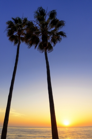 Palm trees silhouetted at sunset in La Jolla, California  Stock Photo