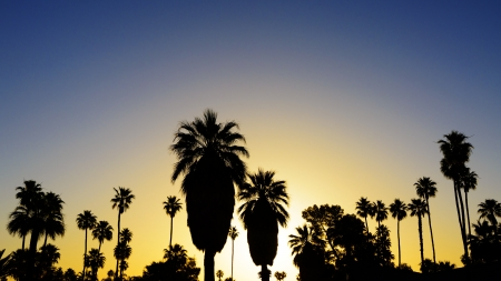 Palm trees silhouetted at sunset  in Palm Springs, California  Stock Photo
