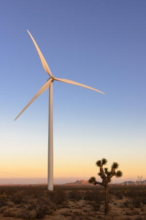 Wind turbine and joshua tree in Mojave, California  photo
