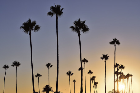 Palm trees at sunset of southern California Stock Photo