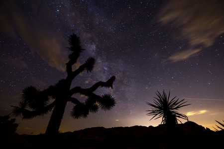 joshua tree national park: Milky Way at night in Joshua Tree National Park.